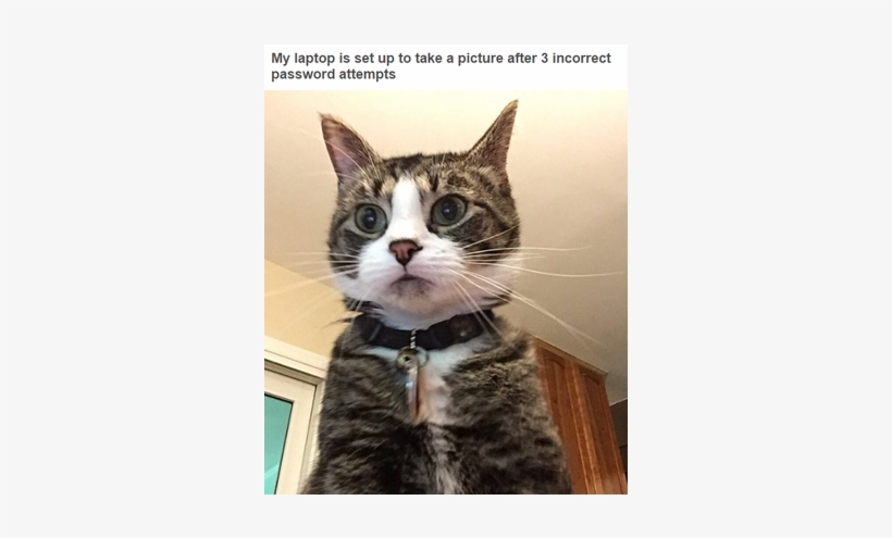 Hilarious Tumblr Posts That All Cat Owners Know To - Cat Breaking Into Computer, transparent png #3325279