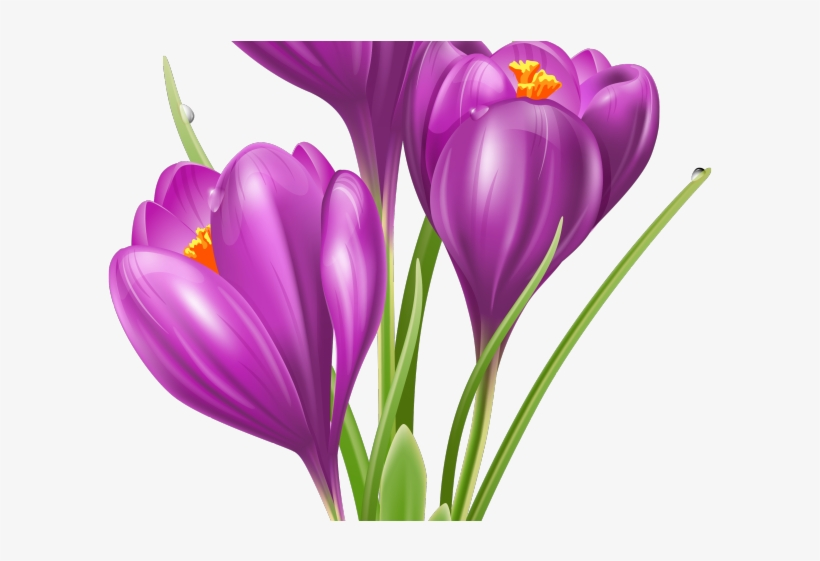 crocus clipart cute flower garden crocus clipart free transparent png download pngkey crocus clipart cute flower garden