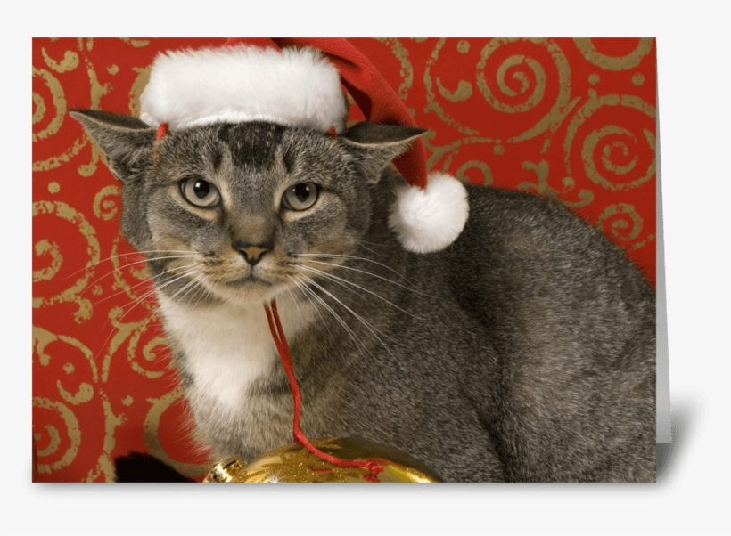 Merry Christmas Greeting Card - Greeting Card, transparent png #3381894