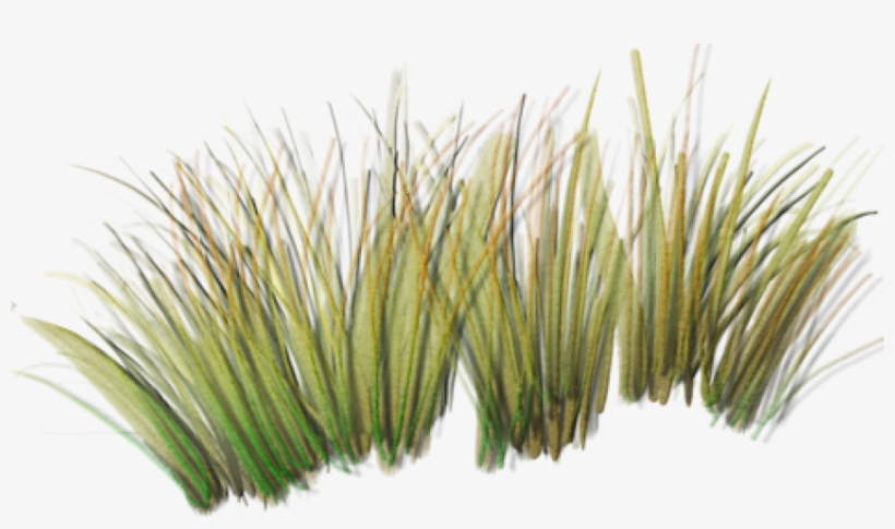 Tall Grass Png Index Of /sid/aw/textures/foliage - Grass Plants Png, transparent png #340570