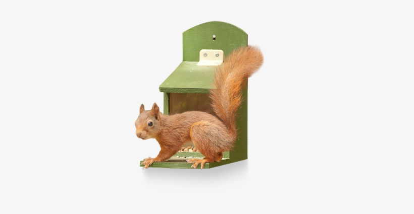 Is To Give Squirrels Their Own Supply Of Food - Fox Squirrel, transparent png #343740