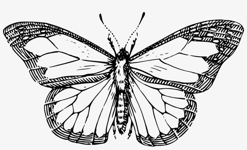 Butterfly Black And White Butterfly Clipart