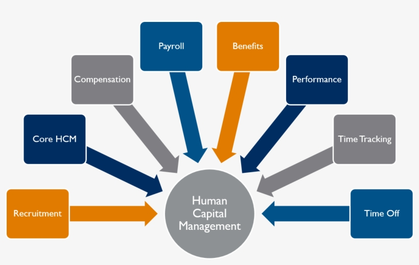 Info Graphic Image Shows Applications Of Workday Hcm - Functions Of Industrial Relations, transparent png #3439534
