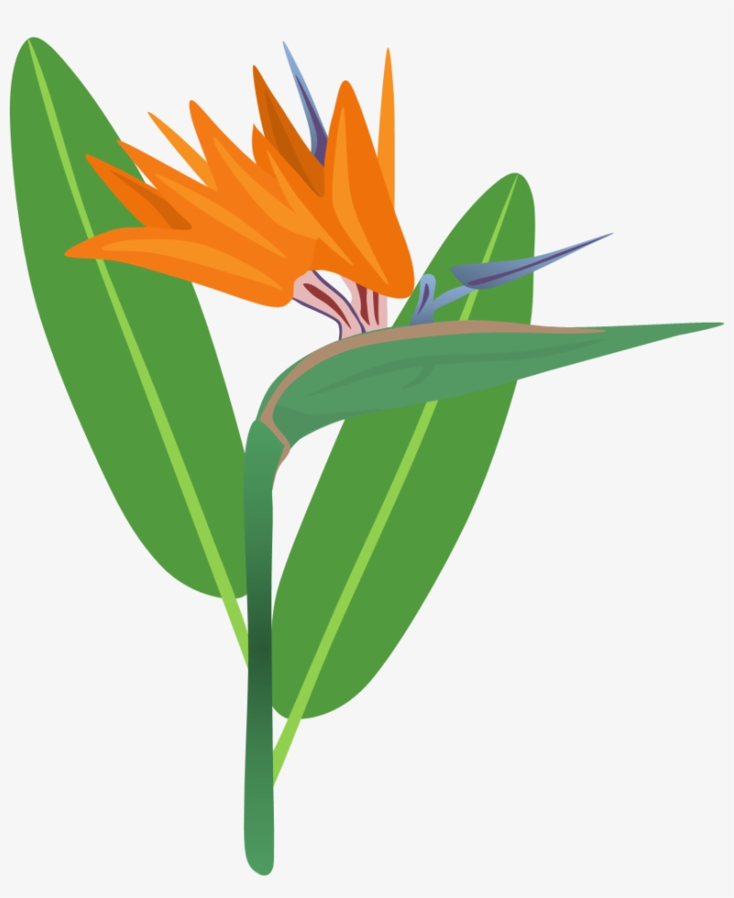 Bird Of Paradise Clipart - Birds Of Paradise Png - Free ... Raggiana Png House Plan on