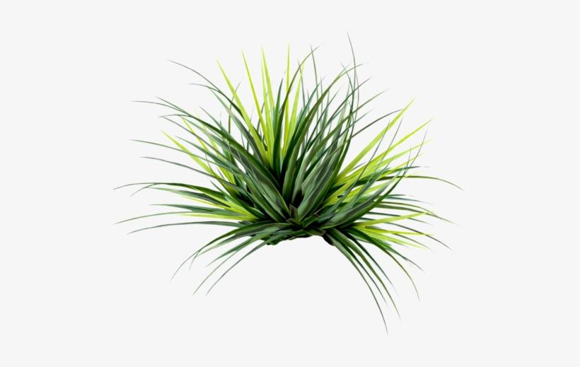 Editando Photoshop - Plantas-png - Fan Palm Leaf Png, transparent png #3490899