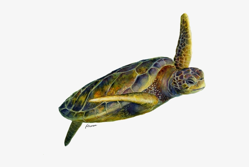 Click And Drag To Re-position The Image, If Desired - Sea Turtle 2, transparent png #357216