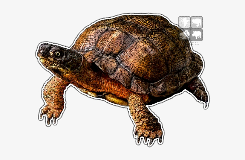 Wood Turtle Decal - Wood Turtle Png, transparent png #359603