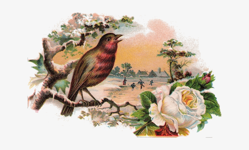 1abirdcard001 - White Rose And Bird Love Story, transparent png #3613017