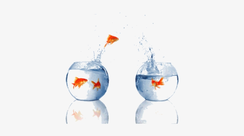 At Emc World 2009, One Thing We Heard Over And Over - Fish Jumping Out Of Water Bowl, transparent png #3634363