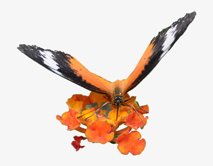 Web Design - Golden Eagle, transparent png #3635807
