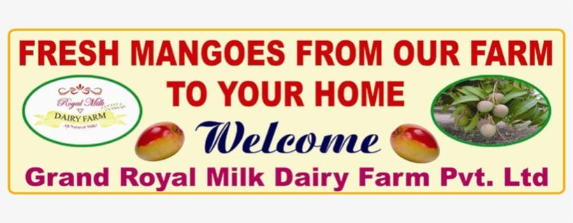 Our Farm Having Mango Plantation Produces Finest Alphonso - Milk, transparent png #3643386