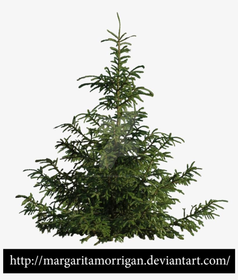 B Tree, Pine Tree, Tree Psd, Landscaping Trees, Garden - Tree, transparent png #3647593