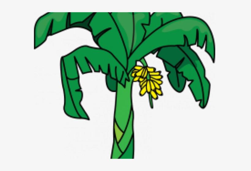 Banana tree. Clipart free transparent png