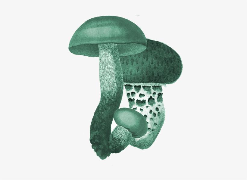 "Menu - 3chicks Farms Edible Mushroom Garden 6 X 6 X 10"", transparent png #3661158"