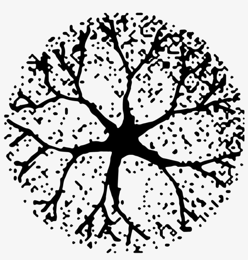 Tree Plan Png Download - Tree Plan Black Png, transparent png #3662793