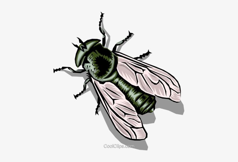 Льняной свадьбой, картинка с мухой для детей