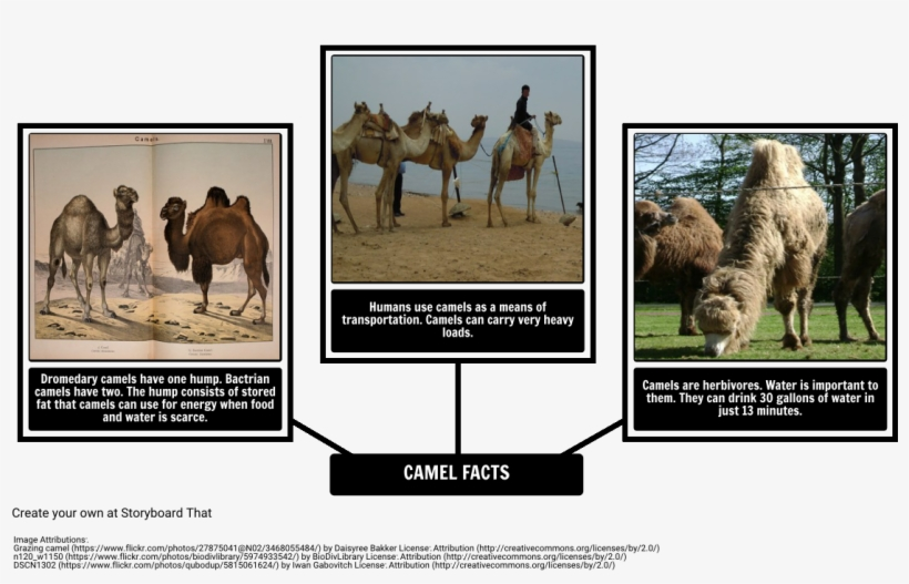 How The Camel Got His Hump - Fun Facts About Dromedary Camel, transparent png #3760204