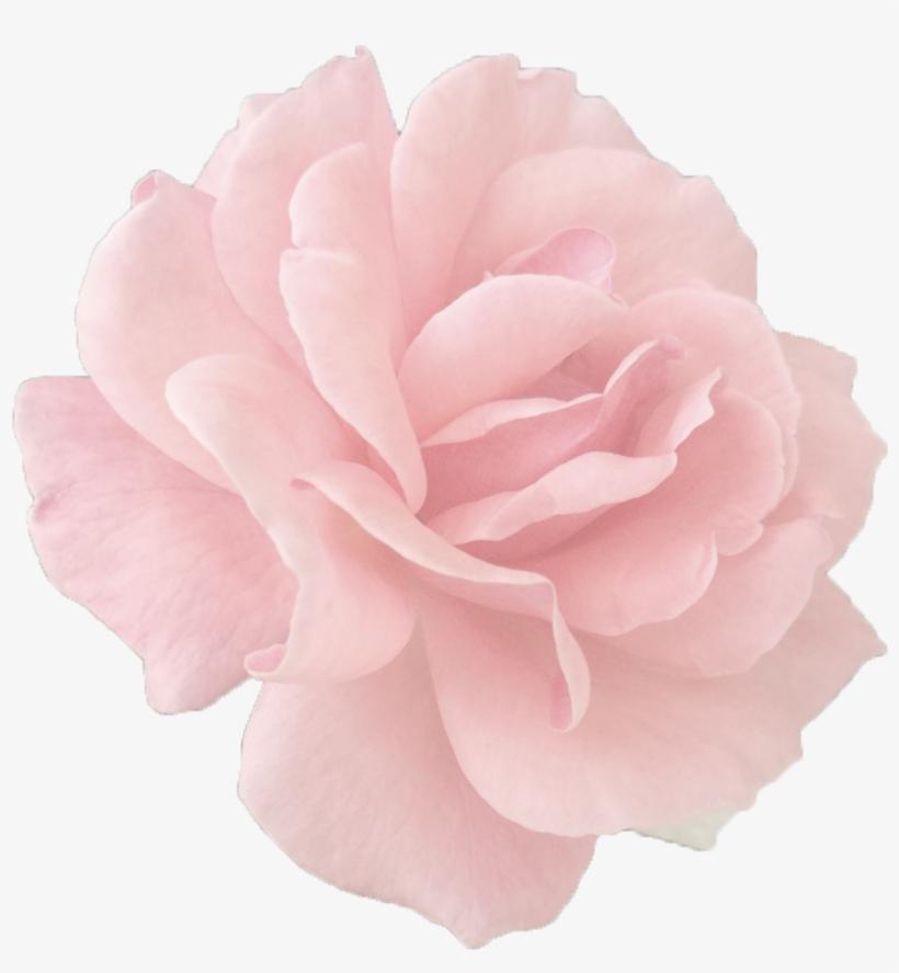 Tumblr Roses Png - Rose Gold Tumblr Roses, transparent png #3767100