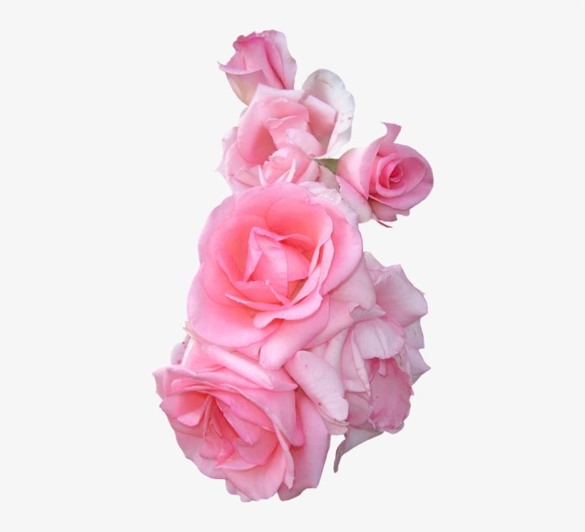 Flowers tumblr pink