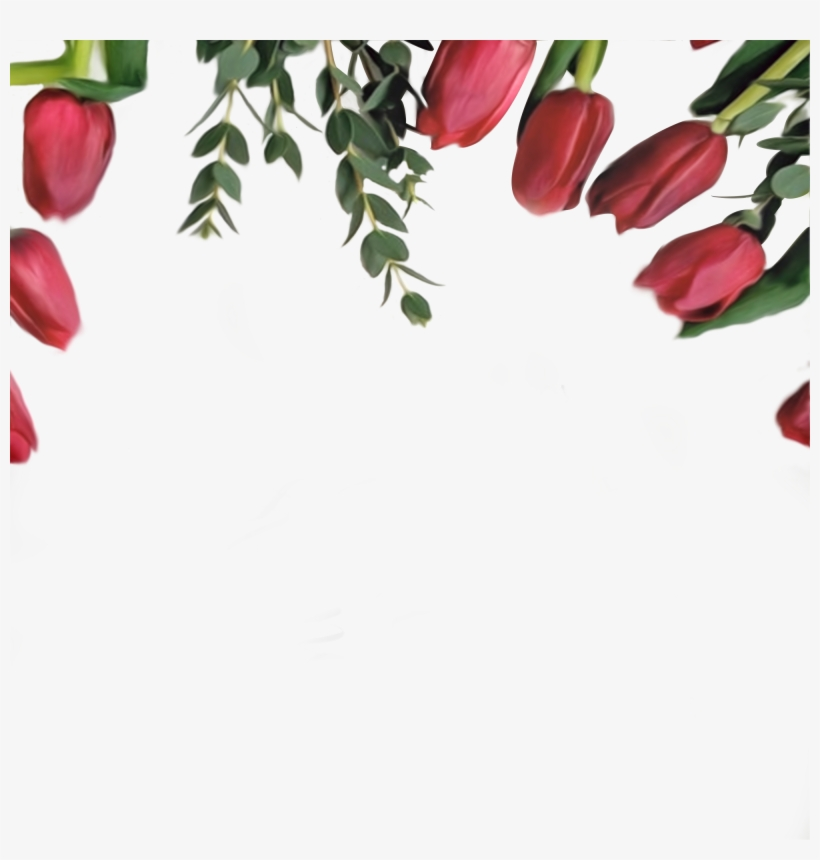 Red Tulips Border On Transparent Background, High Resolution, - High Resolution Border Free, transparent png #3796135