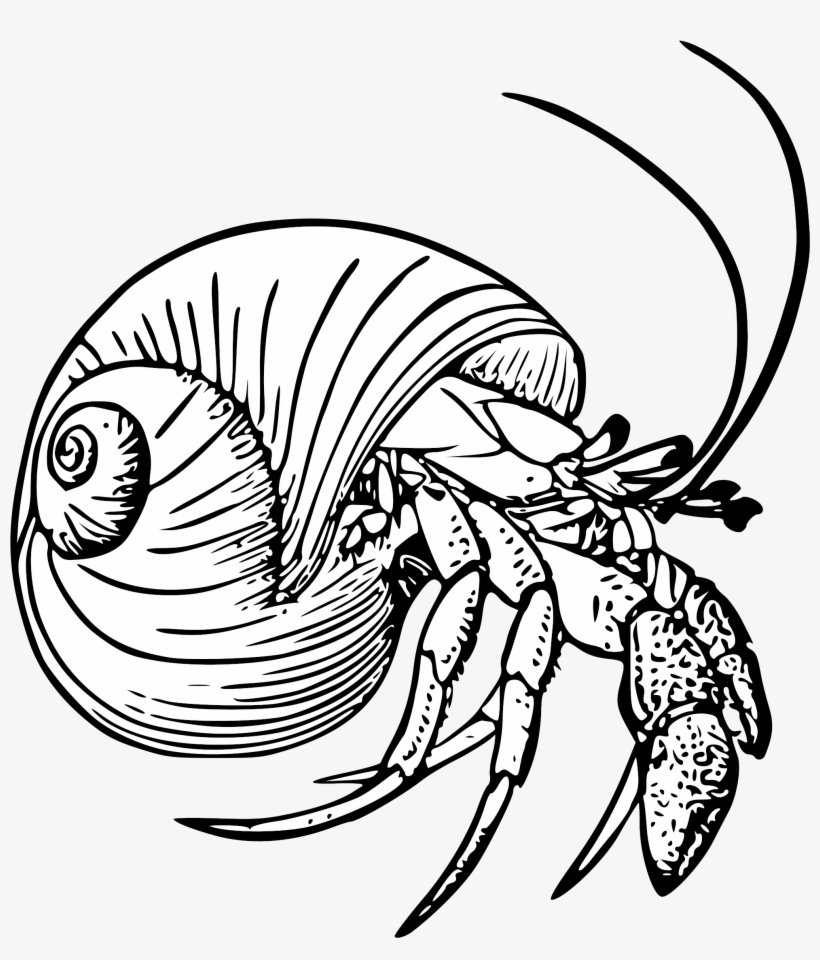 Graphic Black And White Stock Drawing Crabs Hermit Hermit Crab