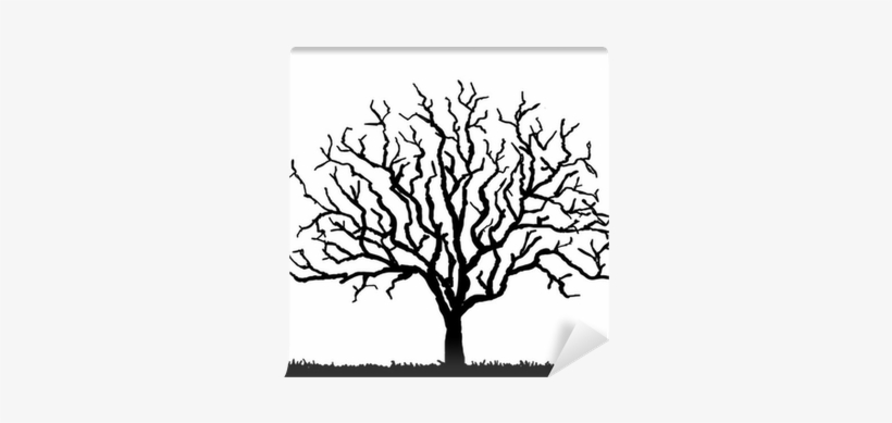 Black Tree Silhouette With No Leaves, Vector Illustration - Tree Silhouette With No Leaves, transparent png #3811297