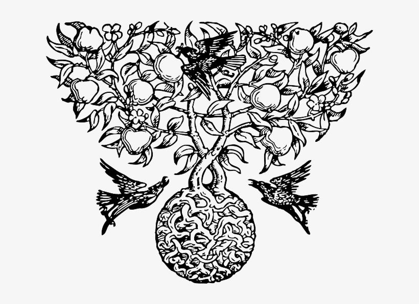 Botanical Drawing Mckeehen - Fruit On Tree Drawing, transparent png #3815679