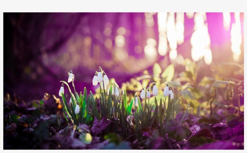 Score 50% - Spring Desktop Backgrounds, transparent png #3859077