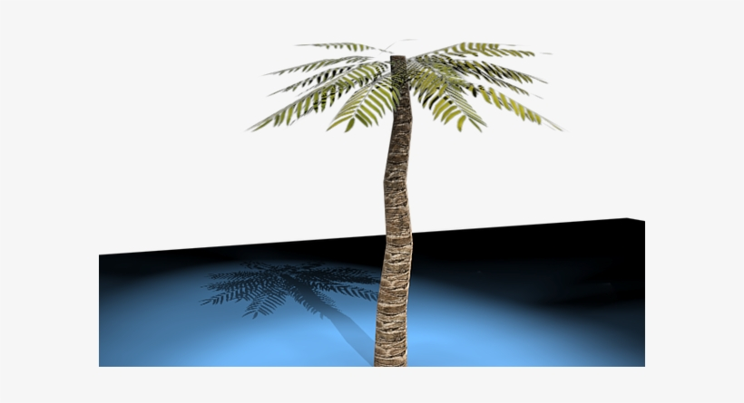 3d Palm Tree Model With Lighting And Shading - Attalea Speciosa