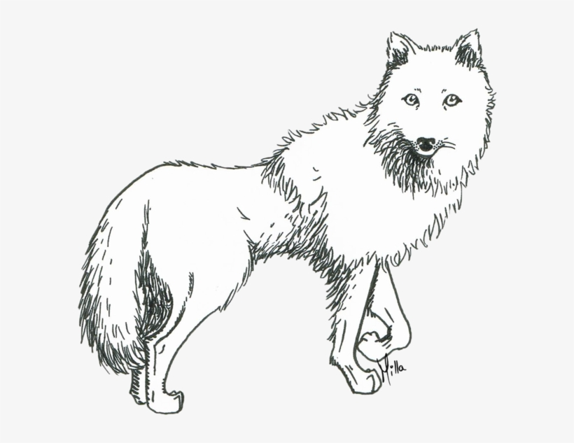 Prometheus Drawing White Wolf - Sketch Of An Arctic Wolf, transparent png #390688