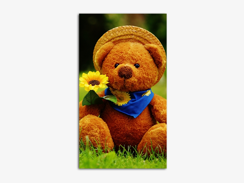 Teddy Bear Wallpaper Hd Day I Met You Free Transparent Png