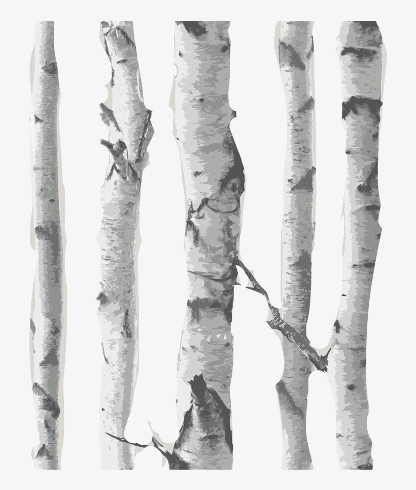 Overlay Matches Birch Background Backgrounds Woods - Birch Tree Transparent Background, transparent png #3908622