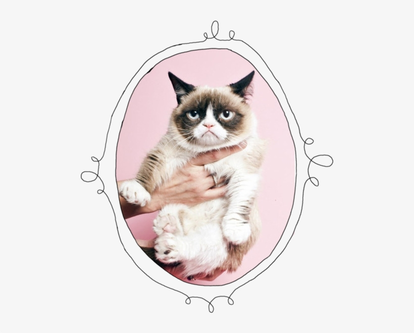 27 Images About Grumpy Cat On We Heart It - Olso Knitting New 2014 Pullover Free Shipping Wholesale, transparent png #3918035