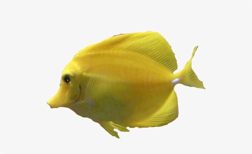Underwater Fish Png Download - Sunwave Mini Boat Tours Ltd., transparent png #3925236
