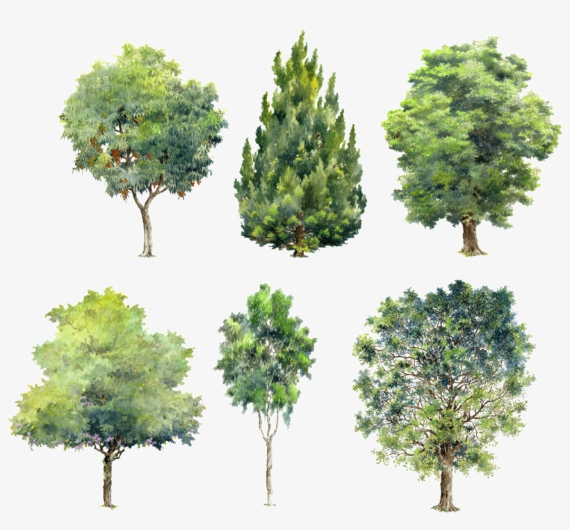 Trees Green Plants Beautiful Hand Painted Png - Watercolor