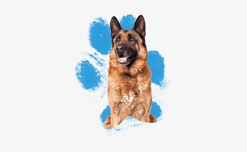 These Dogs Are Very Intelligent And Highly Motivated - Real Dog Paw Print, transparent png #3934948
