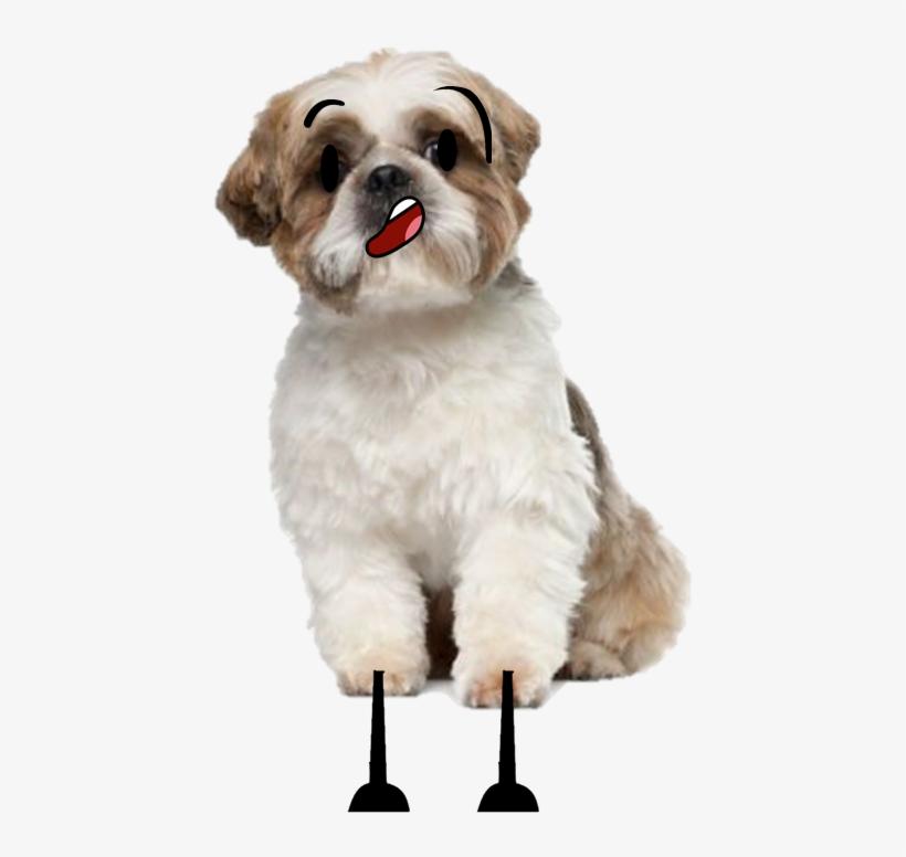 Shish Su The Talking Dog Shih Tzu Free Transparent Png Download