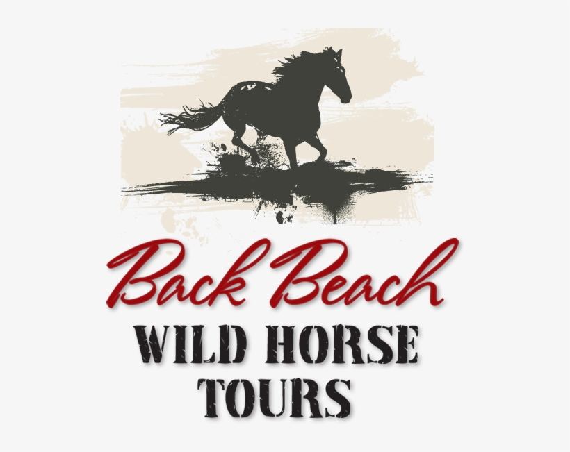 Back Beach Wild Horse Tours Tours In Open Safari Cars - Neil Young & Crazy Horse: Canadian Horsepower (dvd), transparent png #3990750