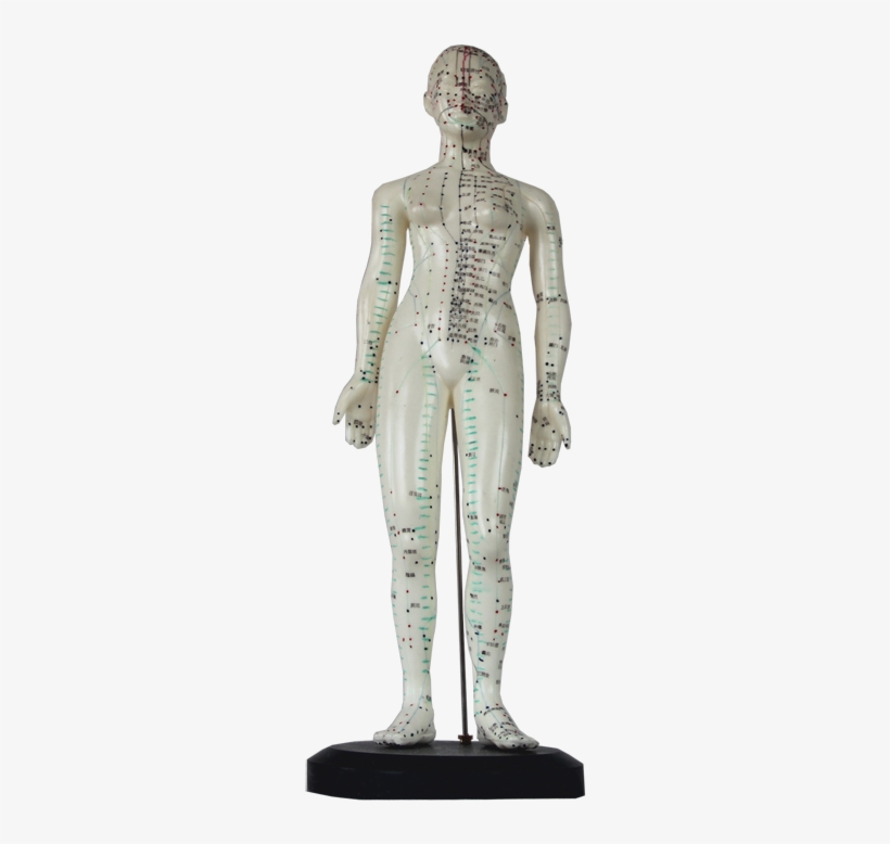 Manikin For Acupunctureproduct No - Suzhou Medical Treatment Products Factory Limited Company, transparent png #3994405