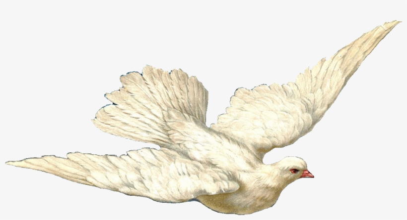 Swallow And Dove - Holy Spirit Dove With Transparent Background, transparent png #40376