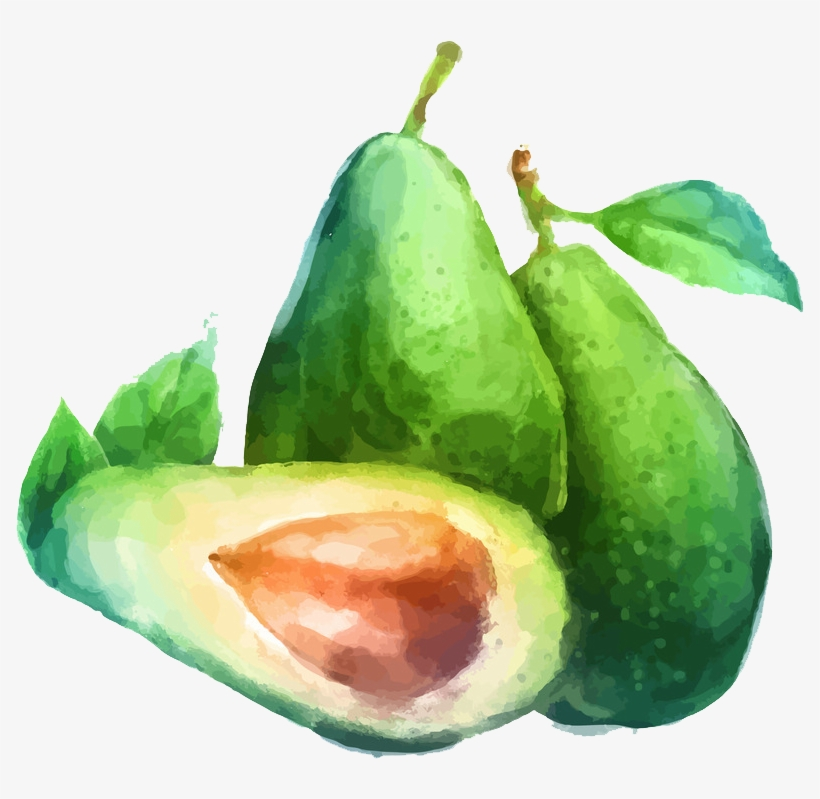 Watercolor Painting Fruit Drawing Illustration - Fruits Drawing Water Colour, transparent png #42460