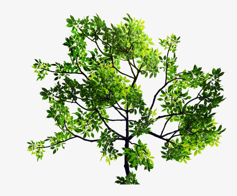 Green Leaves Tree Branch Png Stock Image - Tree Leaves Png, transparent png #42563