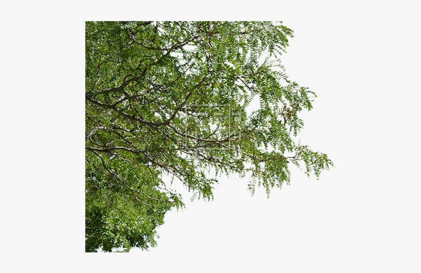 Tree Branches Png Jpg Royalty Free Download - Foreground Tree Cutout, transparent png #43211