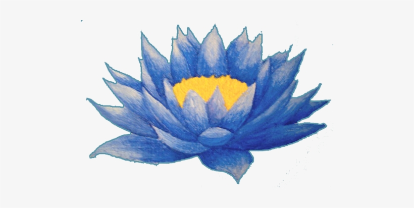 Lotus Flower Tattoos High Quality Photos And Flash Lotus Flower