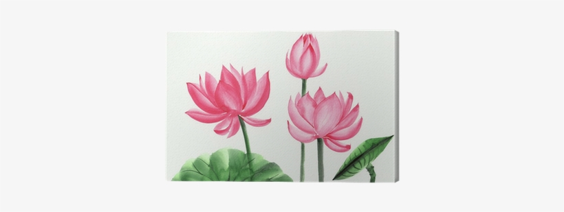 Watercolor Painting Of Pink Lotus Flower Canvas Print - Pink Lotus Water Color, transparent png #45360
