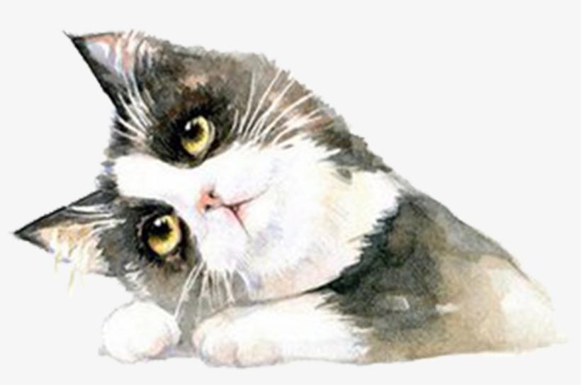 Clip Art Free Stock British Shorthair Ragdoll Hand - Cat, transparent png #45364