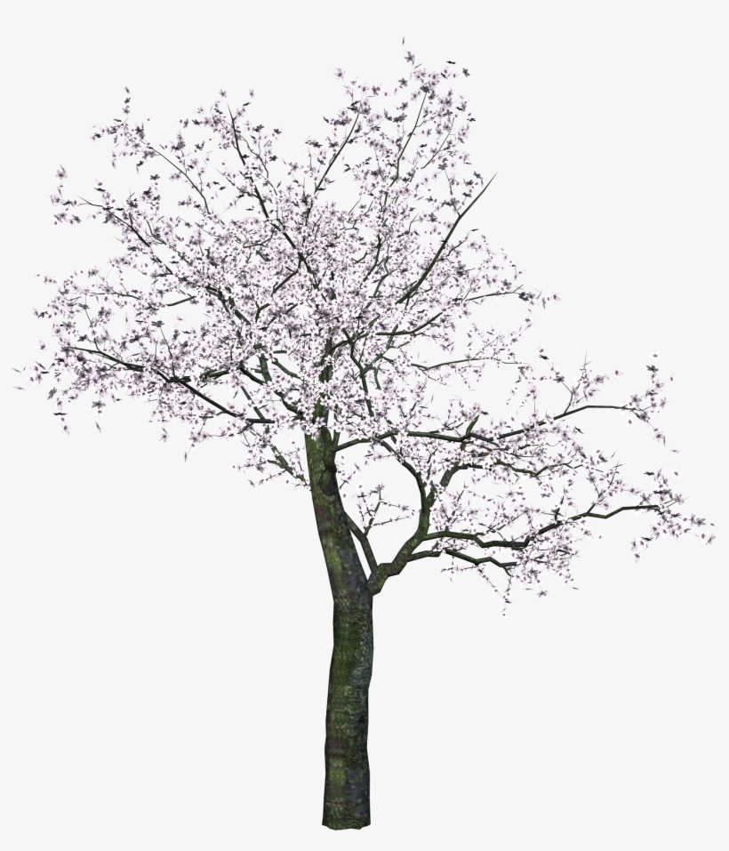 Cherry Tree Png Transparent Image - Cherry Blossom Tree Png, transparent png #46118