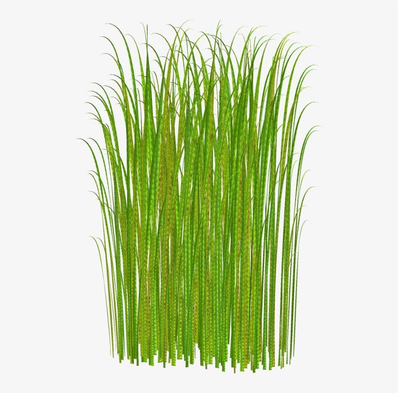 Png Grass Clipart Transparent - Tall Grass No Background, transparent png #46409