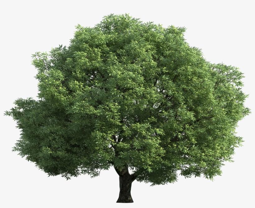 Green Tree Png Clip Art Best Web - Tree Top View Transparent, transparent png #47144