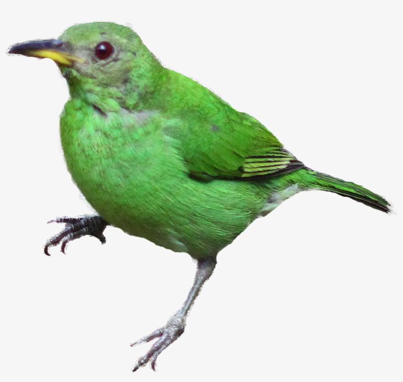 Bird realistic. Clipart vogels afbeeldingen free